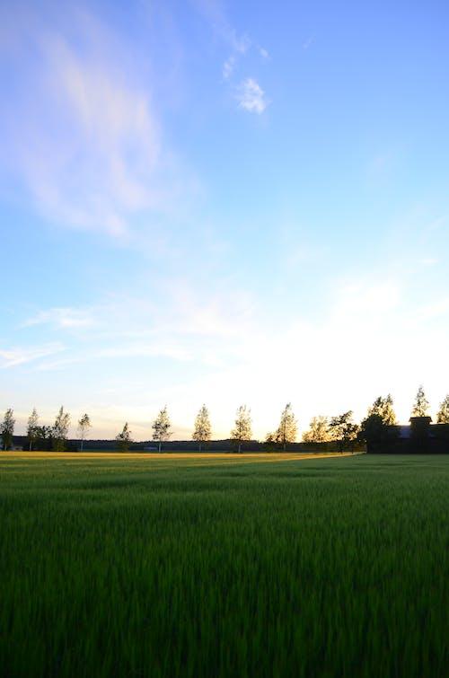 Základová fotografie zdarma na téma Finsko, hřiště, léto