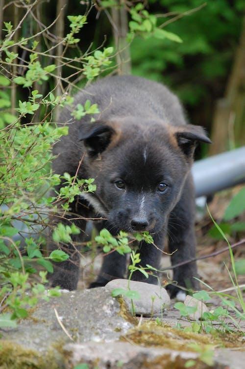 Základová fotografie zdarma na téma štěně