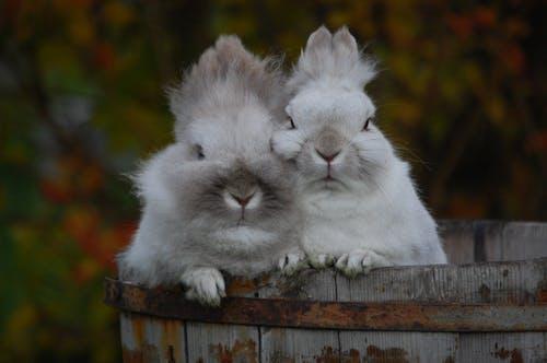 Δωρεάν στοκ φωτογραφιών με κουνελάκια, κουνέλια, μαζί