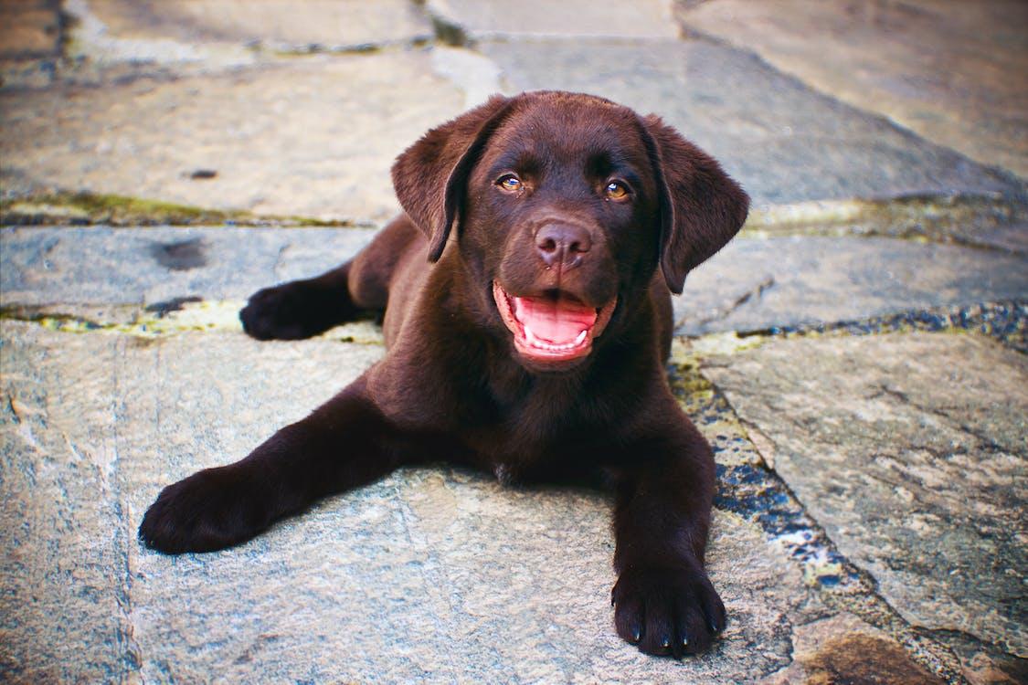Brown Puppy on Concrete Path