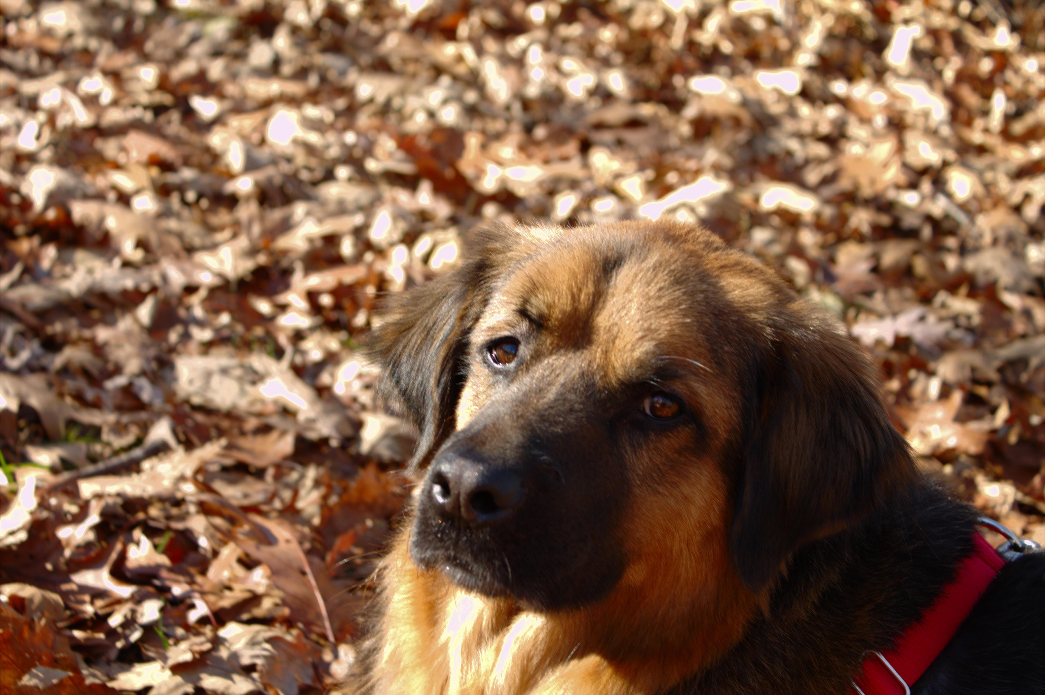 Foto d'estoc gratuïta de amic, amor, cadell, gos