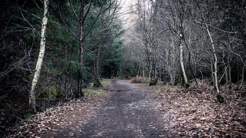 Foto d'estoc gratuïta de bosc, boscos, Camí, caminant