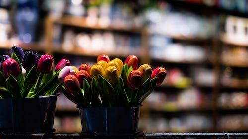 Foto d'estoc gratuïta de 35 mm, amsterdam, carrer, flors