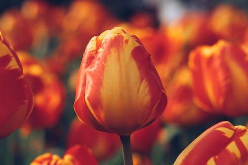 Gratis lagerfoto af blomst, blomsterhave, farvet, have