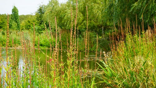 관목, 광야, 나뭇잎, 녹지의 무료 스톡 사진