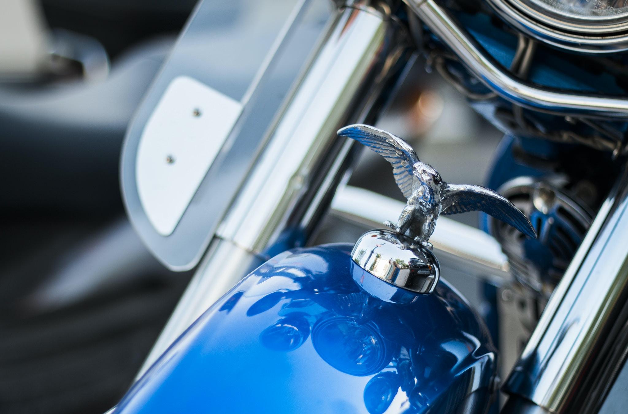 Harley Davidson Emblem on Top Front of Blue Motorcycle ...