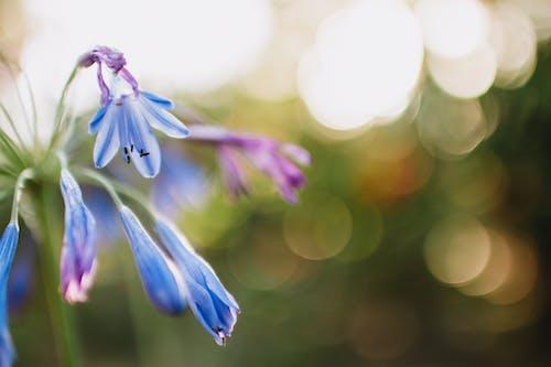 Foto profissional grátis de broto, close, flora, flores