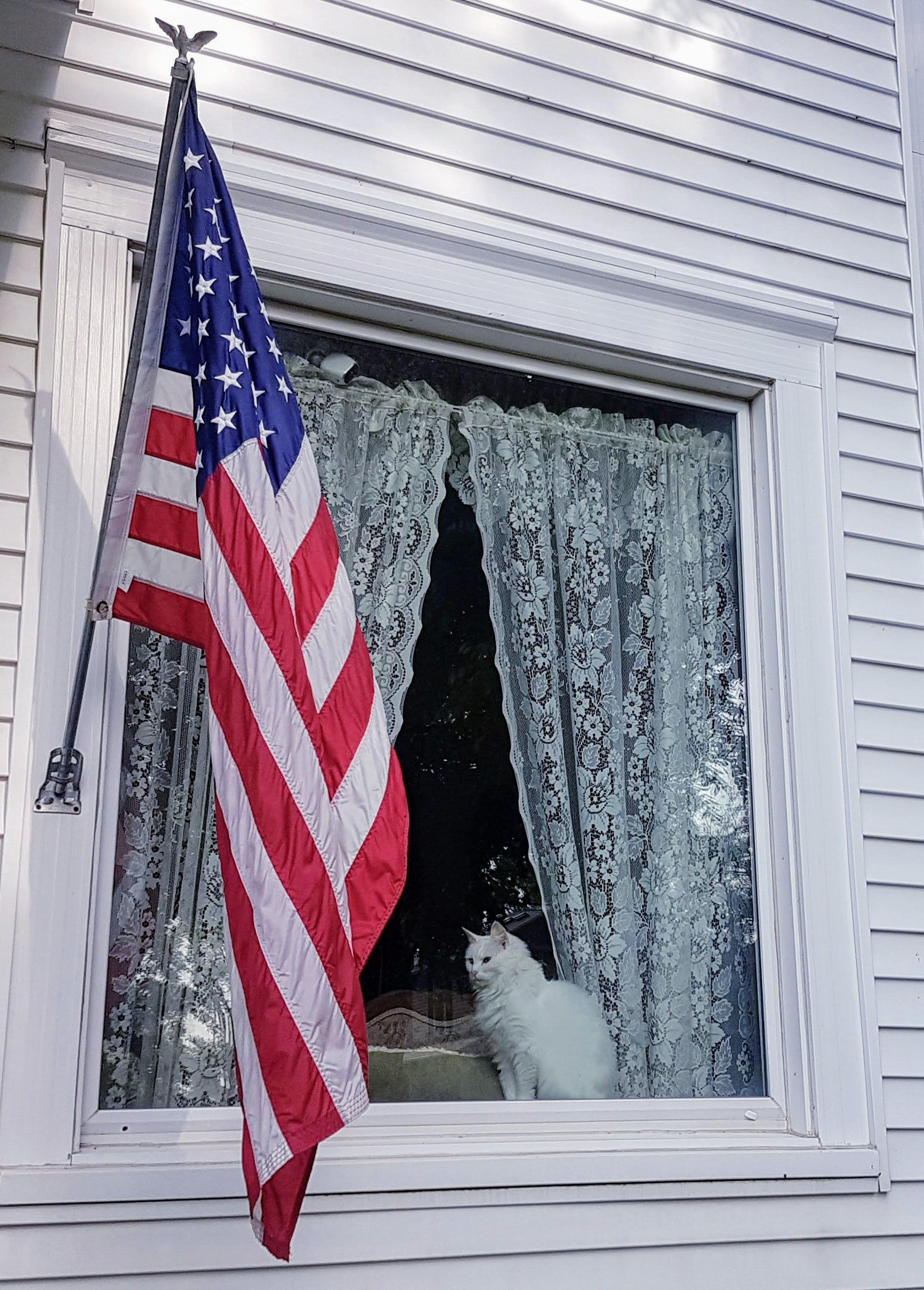 Free stock photo of #cat #window #USA