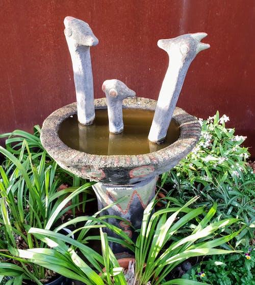 Foto profissional grátis de banho de pássaro, jardim da casa, lagoa no jardim, rústico