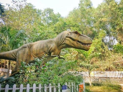 Ingyenes stockfotó állat, állatpark, dinoszaurusz, erdő témában