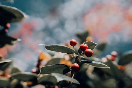 Imagine de stoc gratuită din creangă, fotografie de aproape, plantă