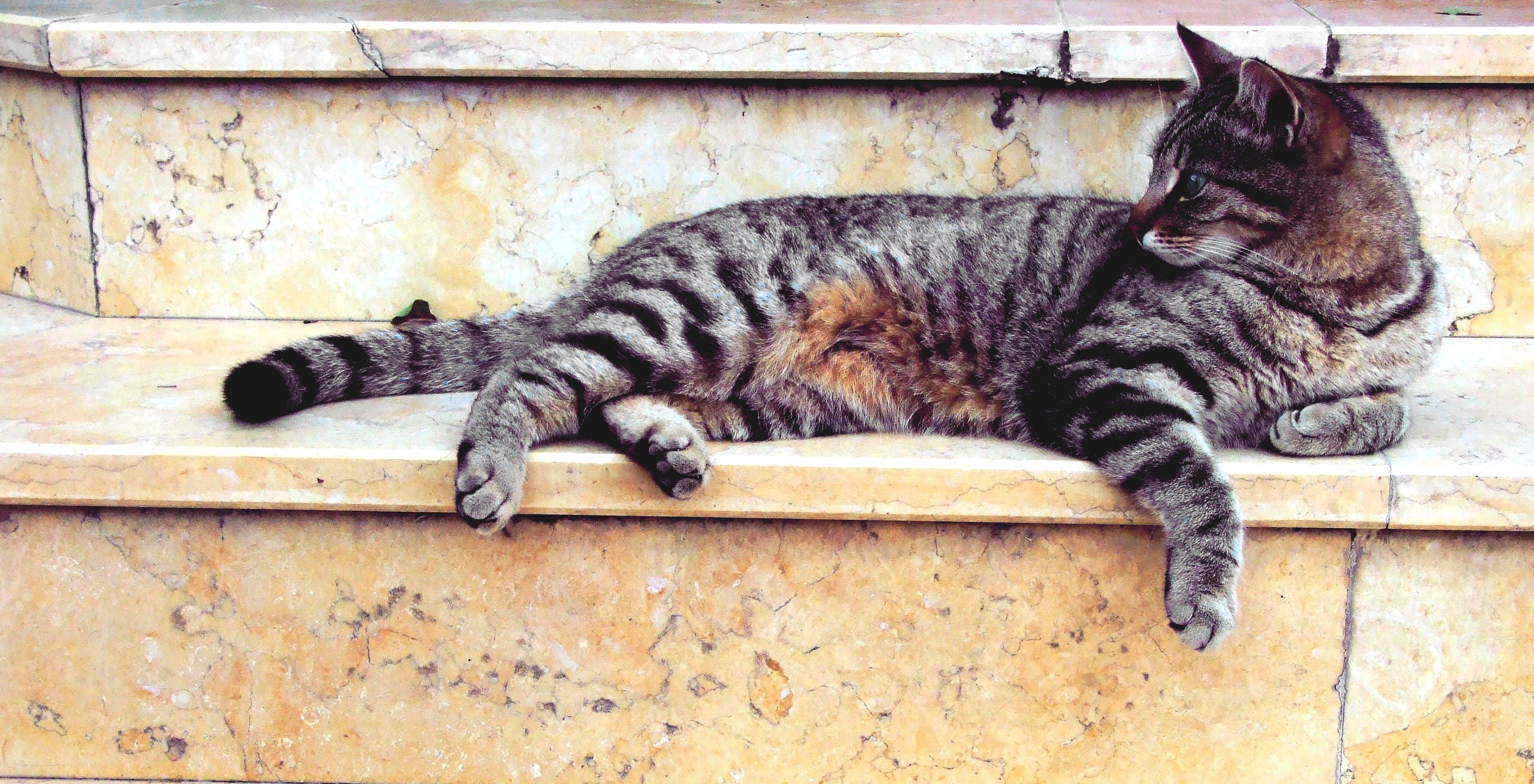 Grey Cat Lying in Marble Stairway