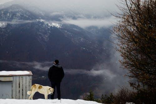 Fotos de stock gratuitas de animal, canino, frío, Georgia