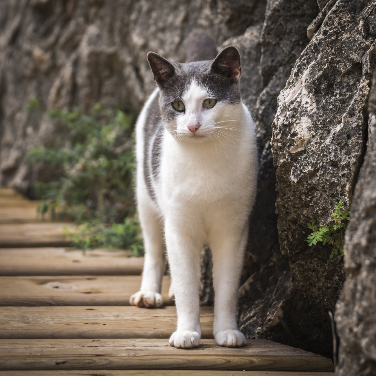cat standing on walkway
