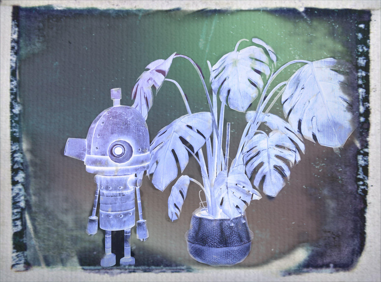 Gratis stockfoto met cyanotype