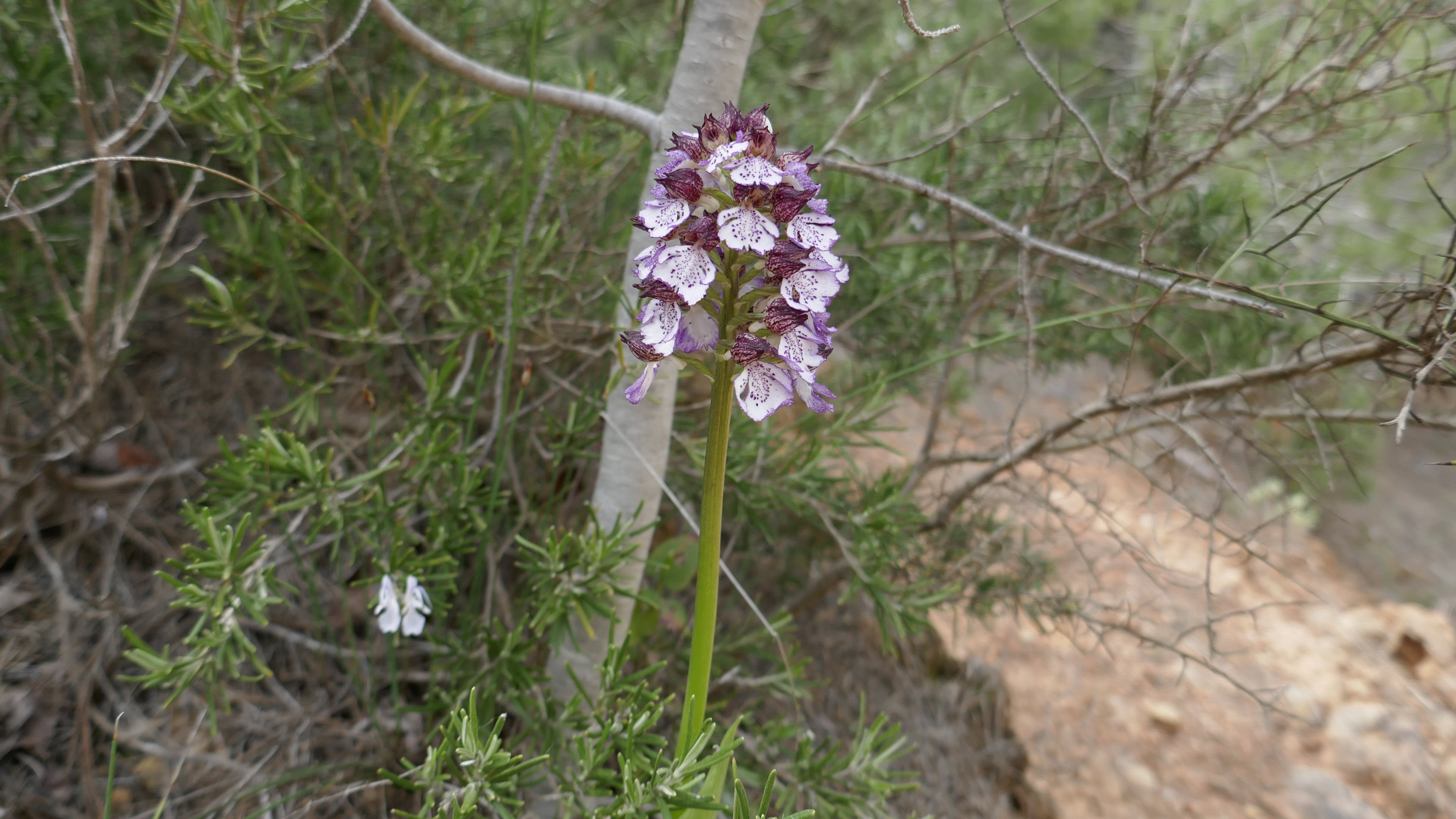 Free stock photo of close-up view, Wild delicate orchid in grassland