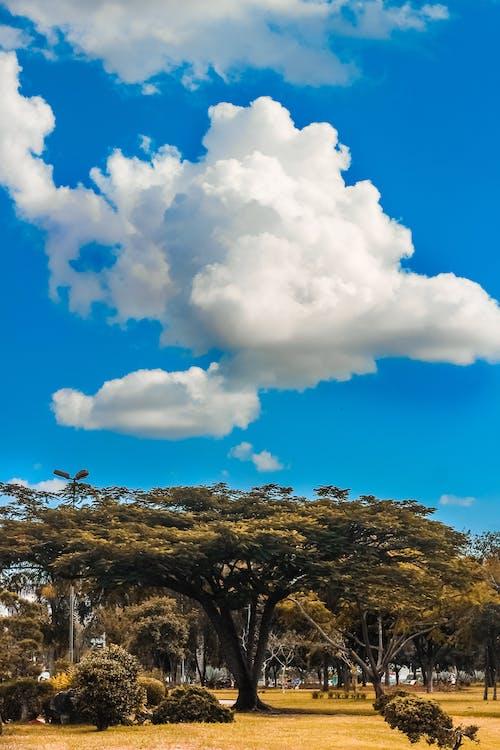 Free stock photo of blue sky, céu, landscape