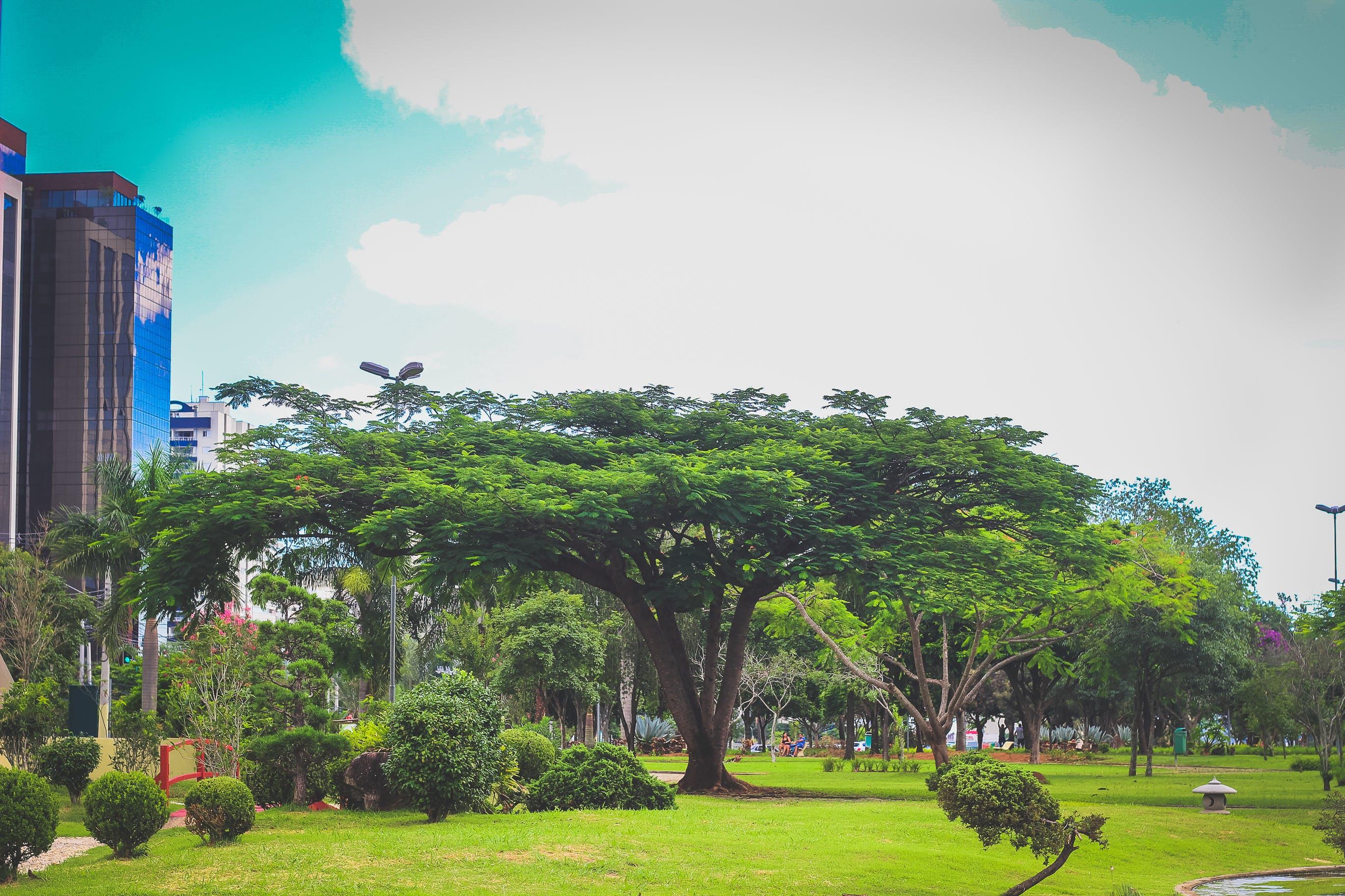 Free stock photo of blue sky, landscape, nature, natureza