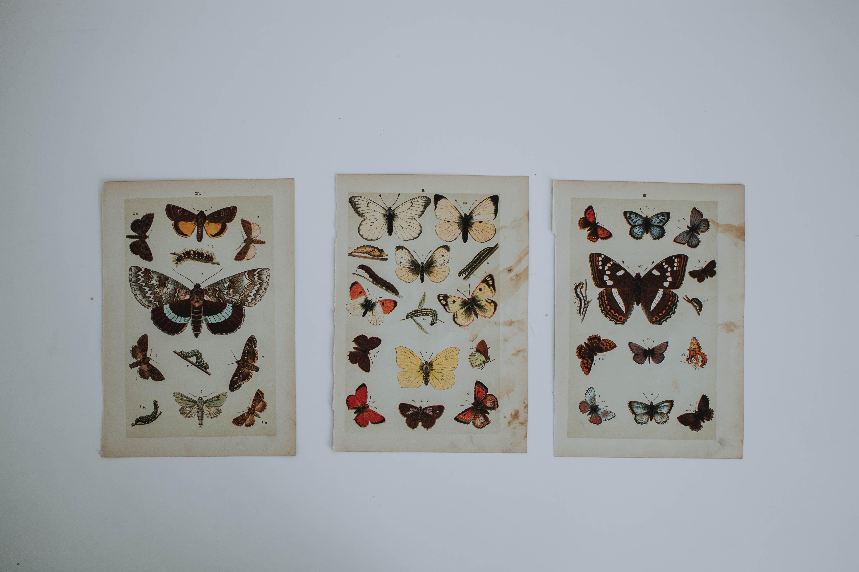 Assorted Color Butterflies Wall Decor
