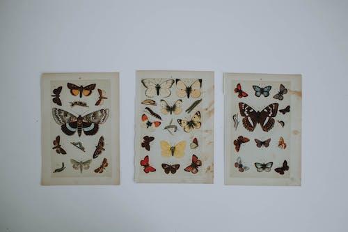 Darmowe zdjęcie z galerii z grafika, kolekcja, motyle, projekt