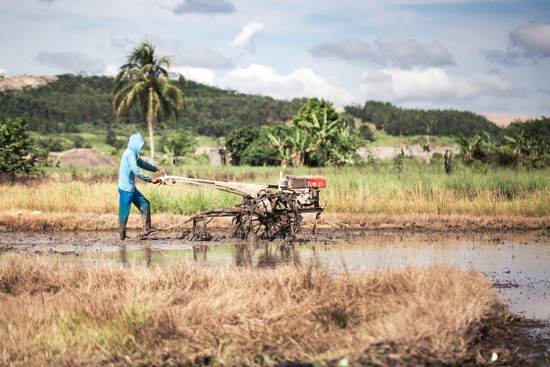 indonesia, kenttä, maanviljelijä