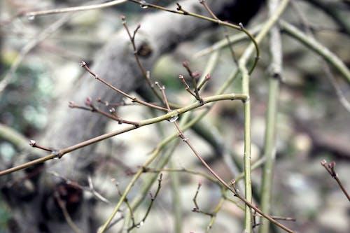 Ilmainen kuvapankkikuva tunnisteilla harmaa, oksa, pilvinen, puu