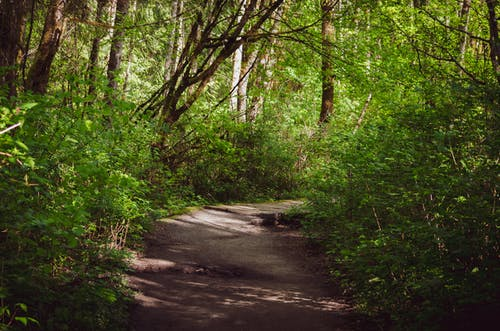 Free stock photo of forest, hike, spring hike, woods