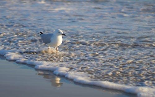 Photos gratuites de ailes, eau, faire signe, mer