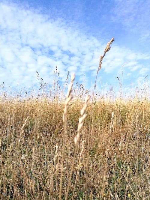 Základová fotografie zdarma na téma hřiště
