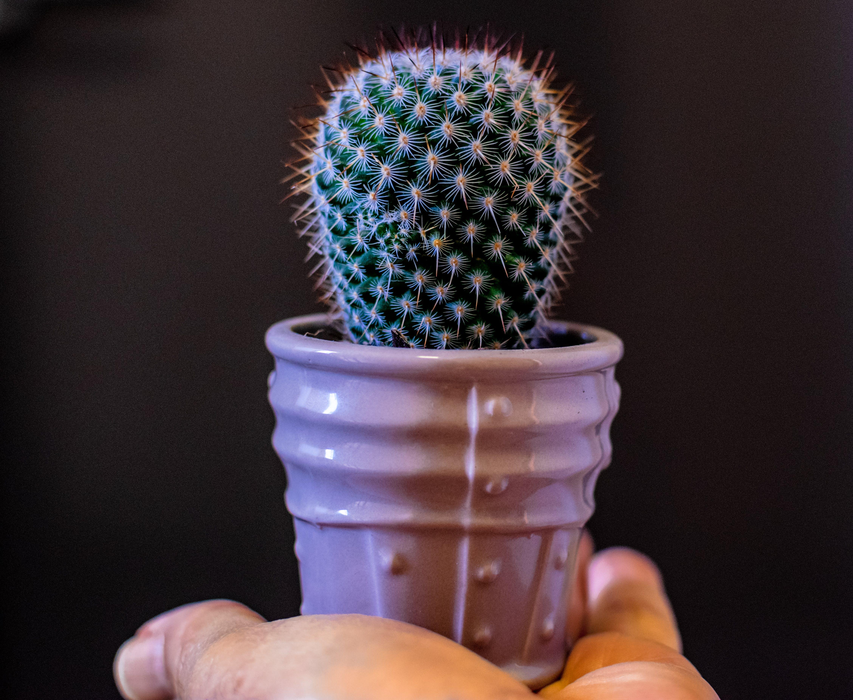 Бесплатное стоковое фото с ваза, горшечное растение, завод, кактус