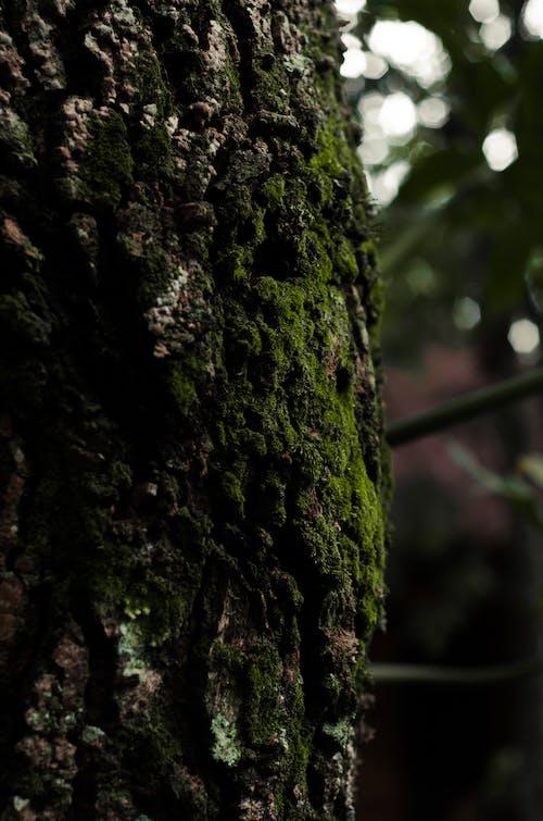 Δωρεάν στοκ φωτογραφιών με βρύο, δέντρο, κορμός