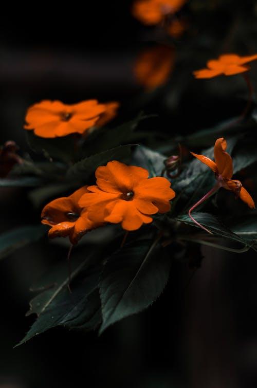 Darmowe zdjęcie z galerii z kwiaty, piękny kwiat