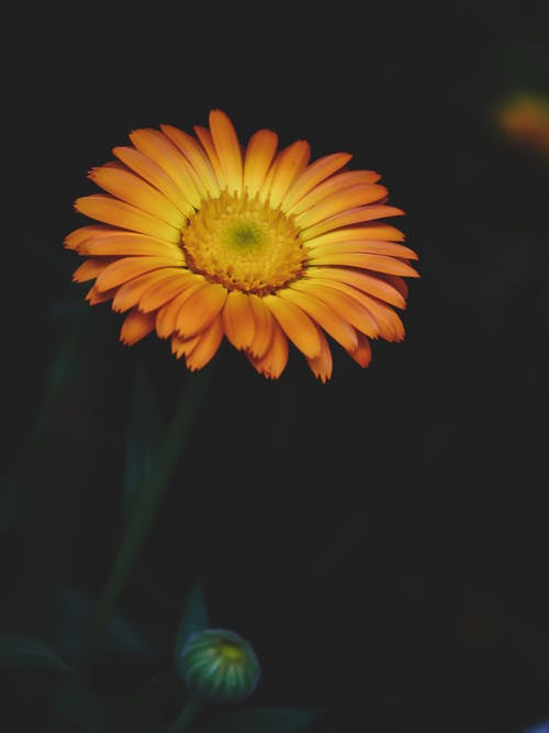 Fotos de stock gratuitas de amarillo dorado, brotar, Campo de flores, Fondo de pantalla 4k