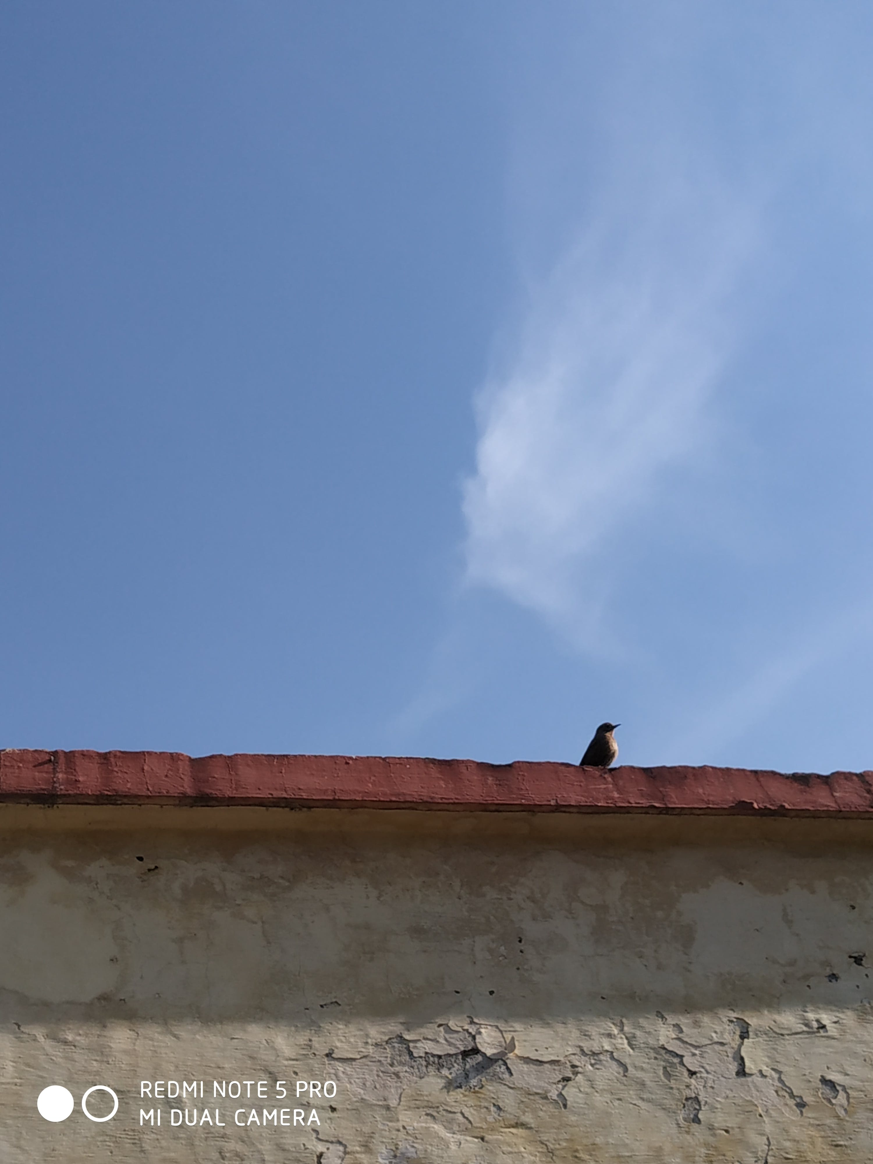 Free stock photo of #bird, #blue, #sky