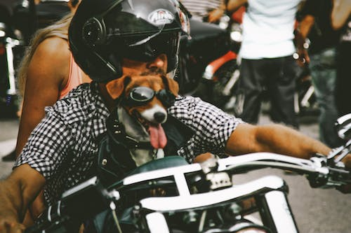 Close-Up Photo of Man and Dog Riding Motorcycle