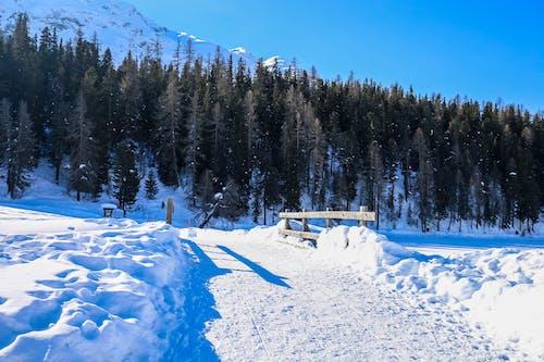 Foto stok gratis gunung, langit biru, musim dingin, salju