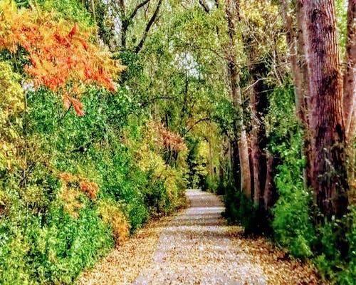 Gratis stockfoto met # nature #tree #, #vallen