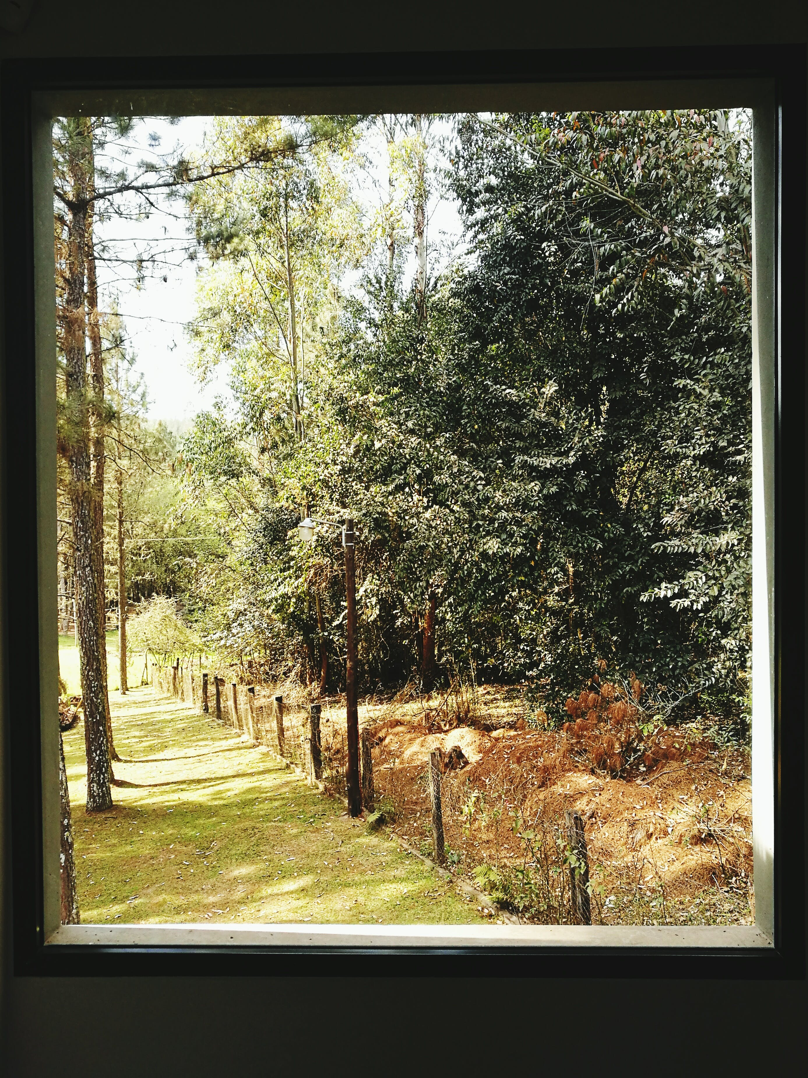 Free stock photo of #green #bosque #view #window