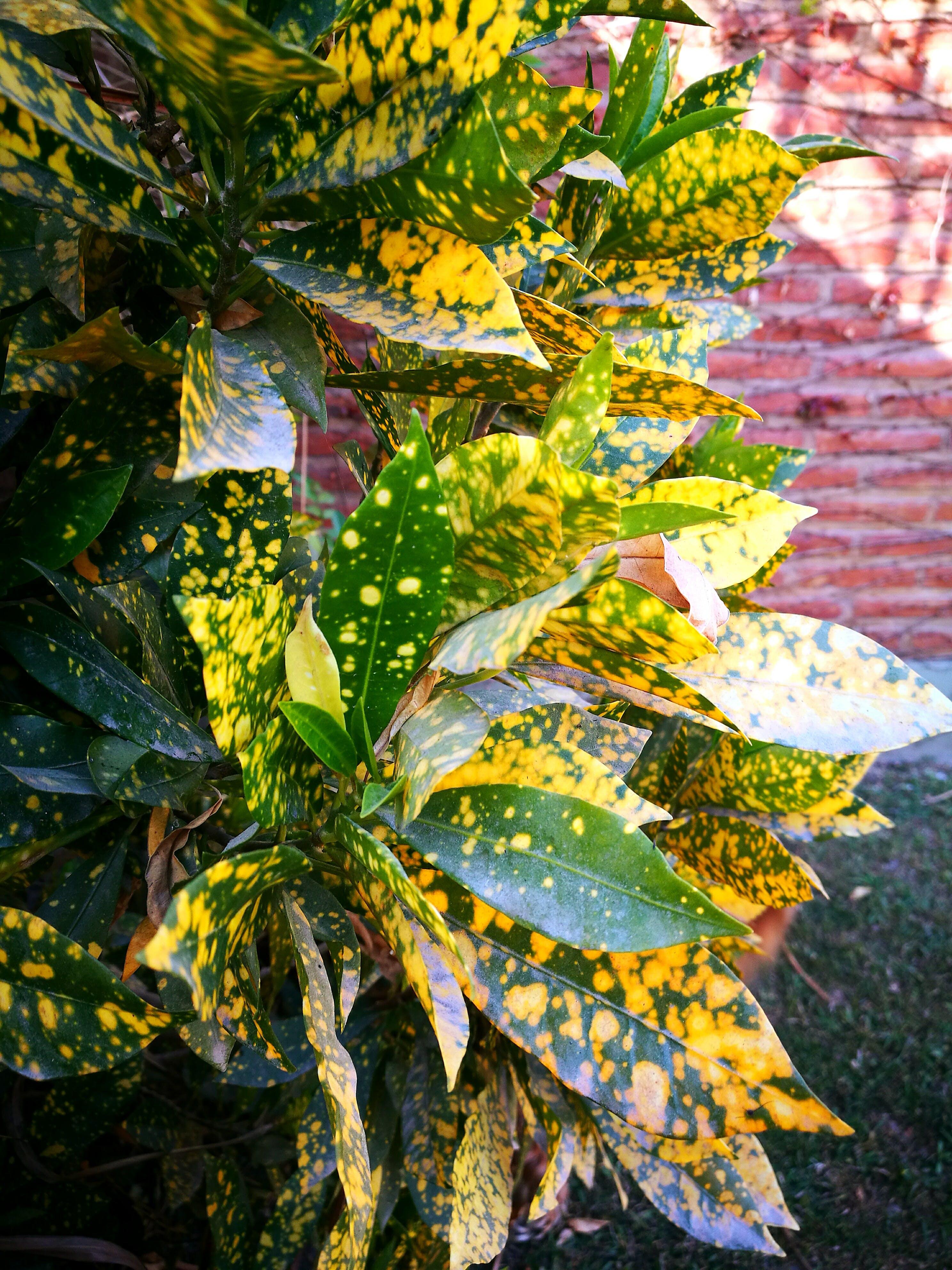 Free stock photo of #green #plantas