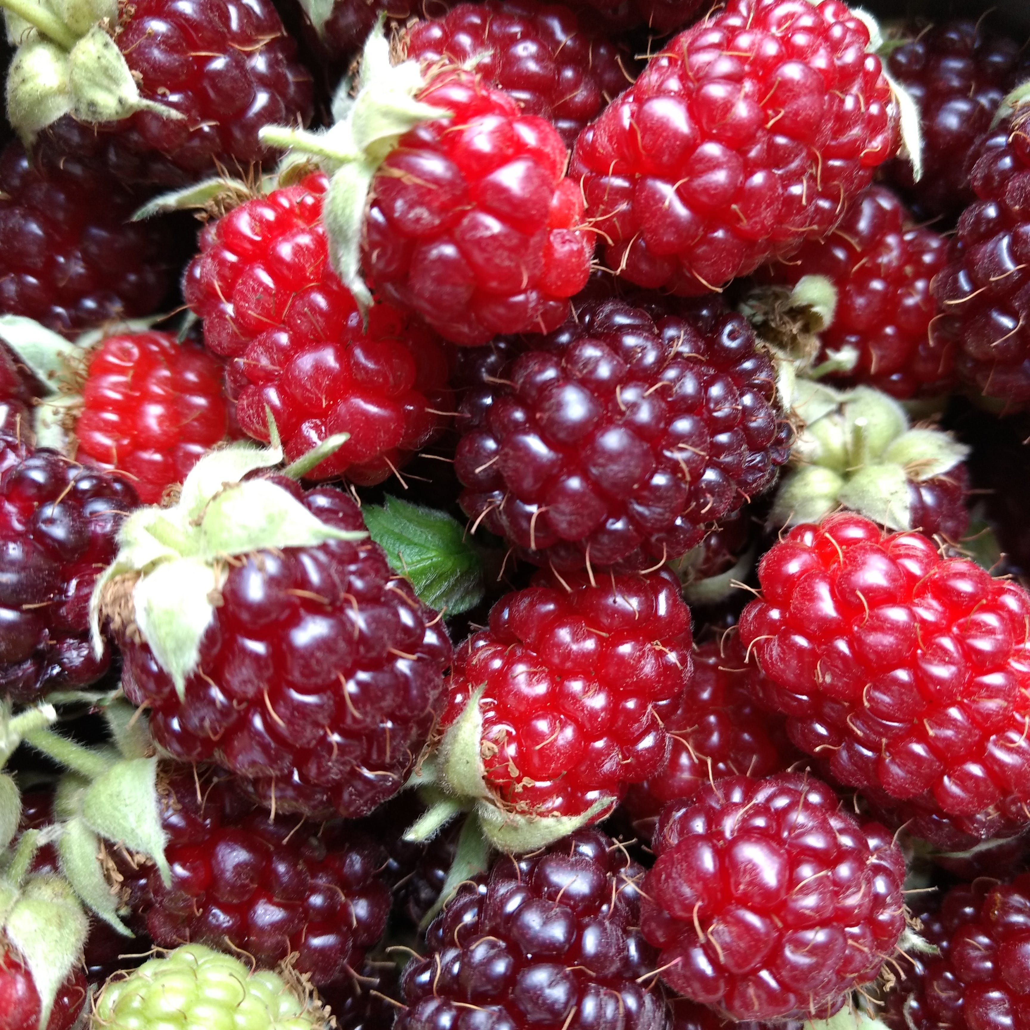Free stock photo of #strawberries #red