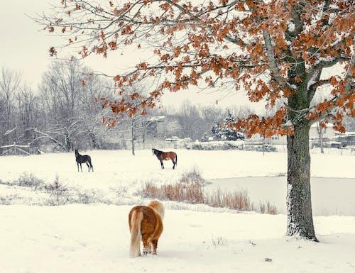 Imagine de stoc gratuită din animal, animale de fermă, anotimp, arbori