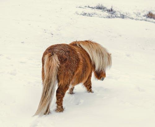 Ảnh lưu trữ miễn phí về con vật, cưỡi ngựa, dễ thương, lạnh