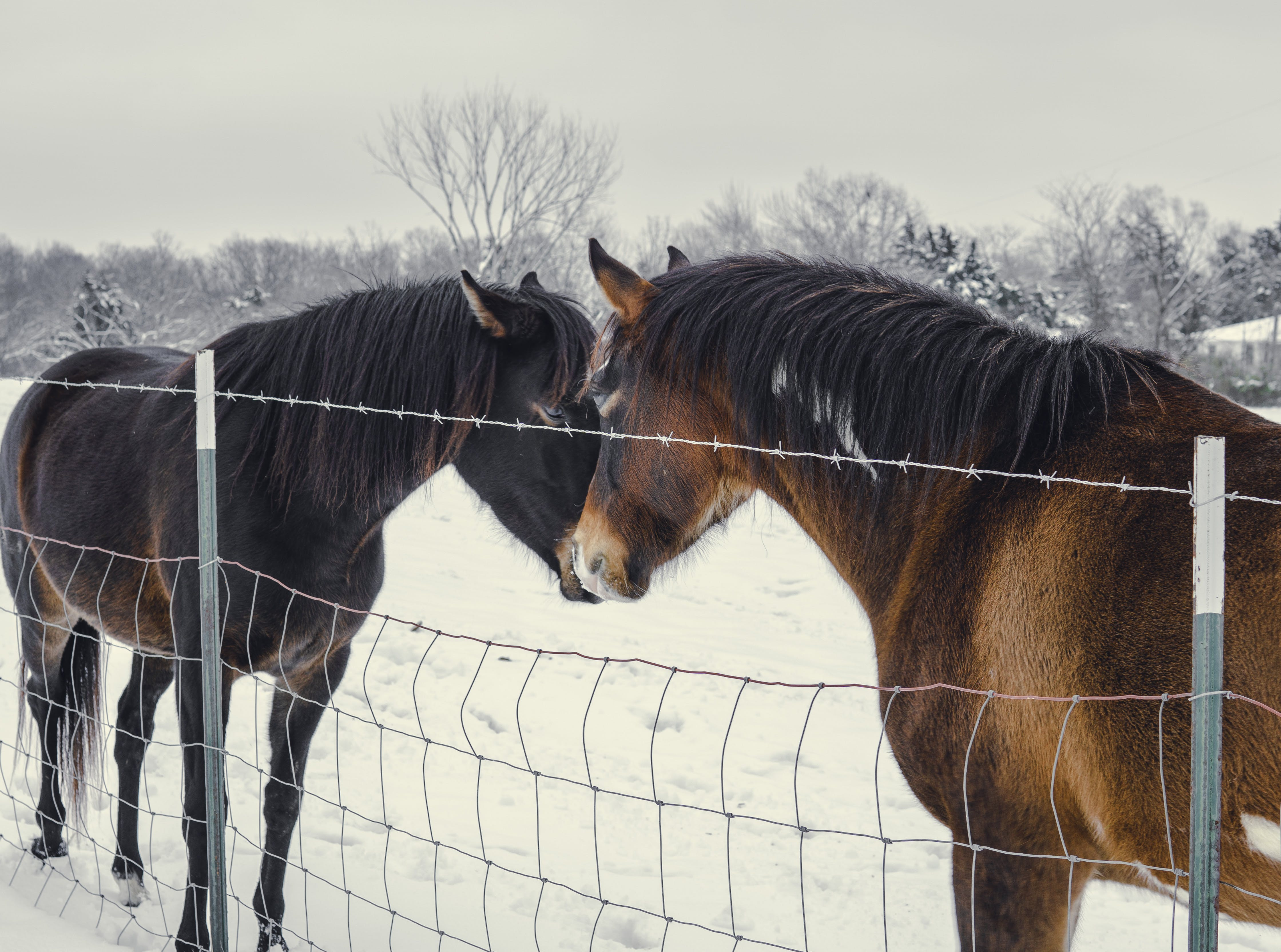 Black and Brown Horses near a Fence during Winter