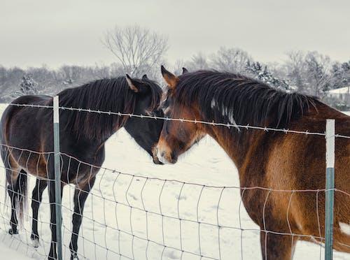 Základová fotografie zdarma na téma divoký, domácí zvířata, farmářská zvířata, hospodářská zvířata