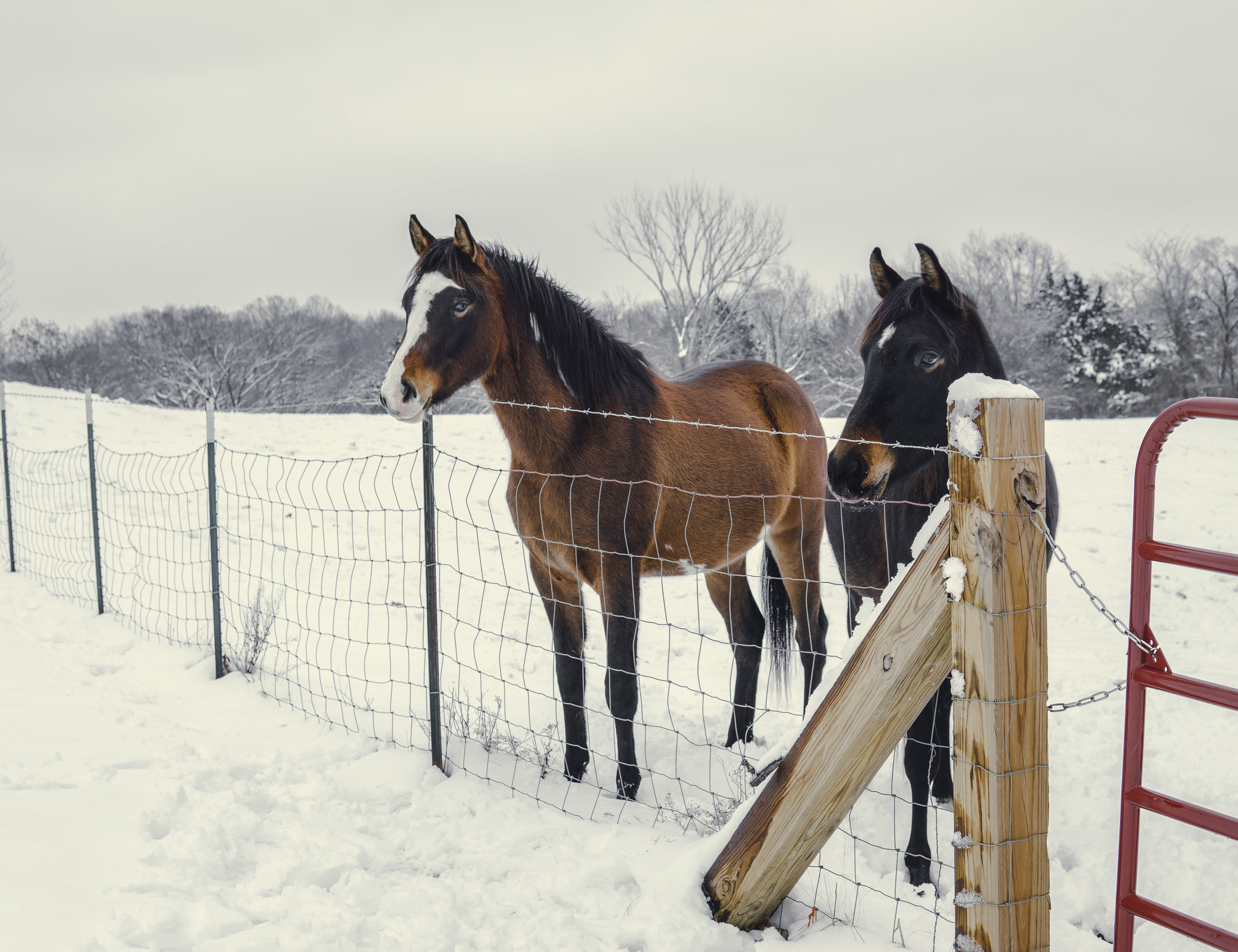 Two Black and Brown Horses
