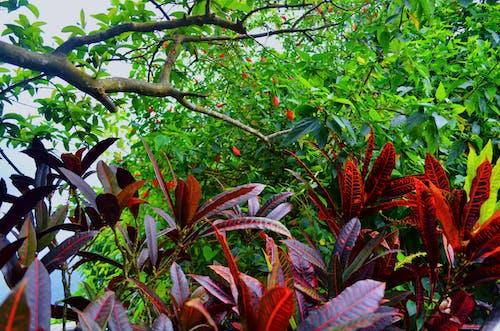 Foto d'estoc gratuïta de a l'aire lliure, bellesa a la natura, bosc, brasil