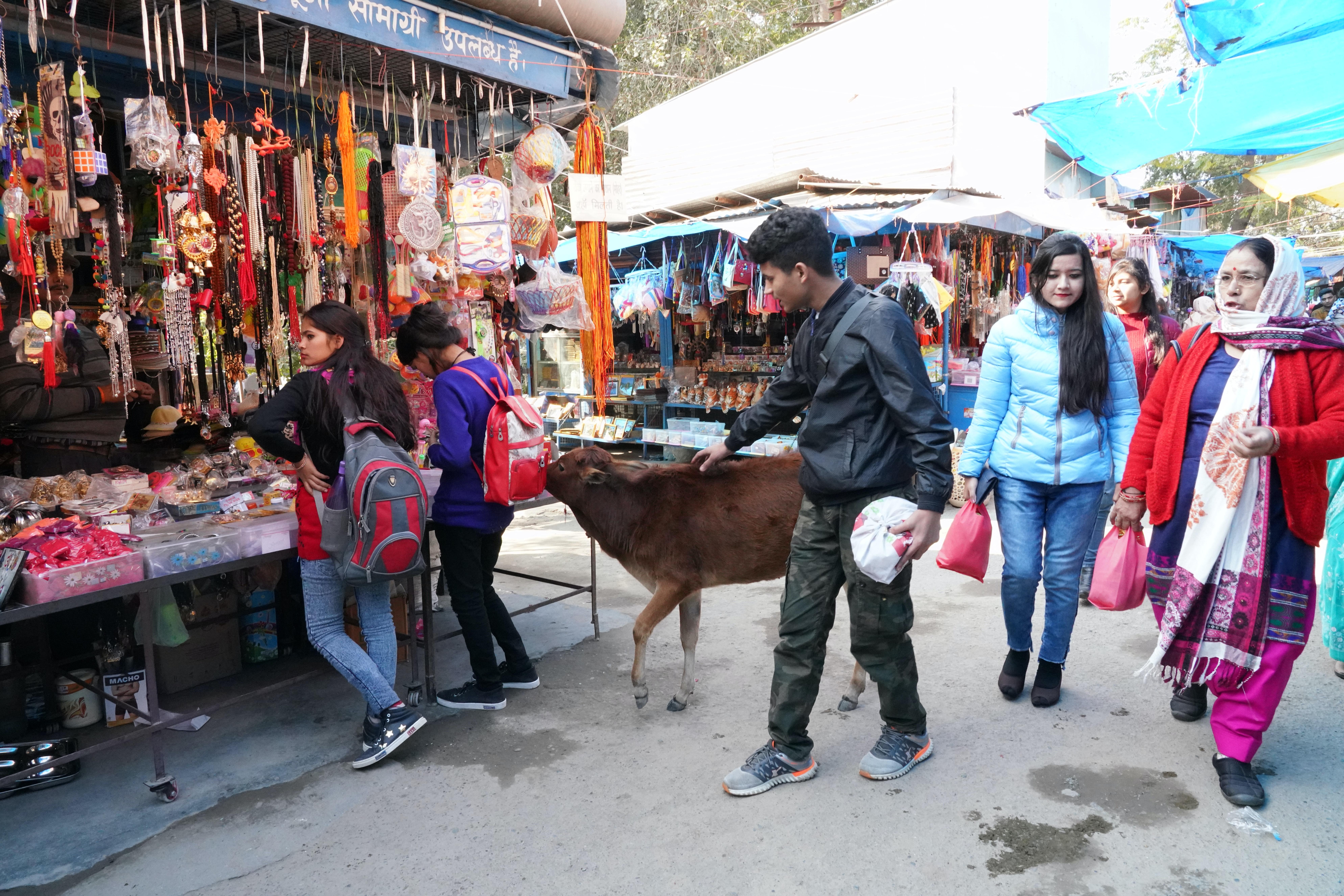 Free stock photo of cow, local market, market