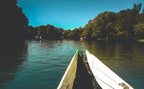 Foto profissional grátis de água, árvores, aventura, barcos
