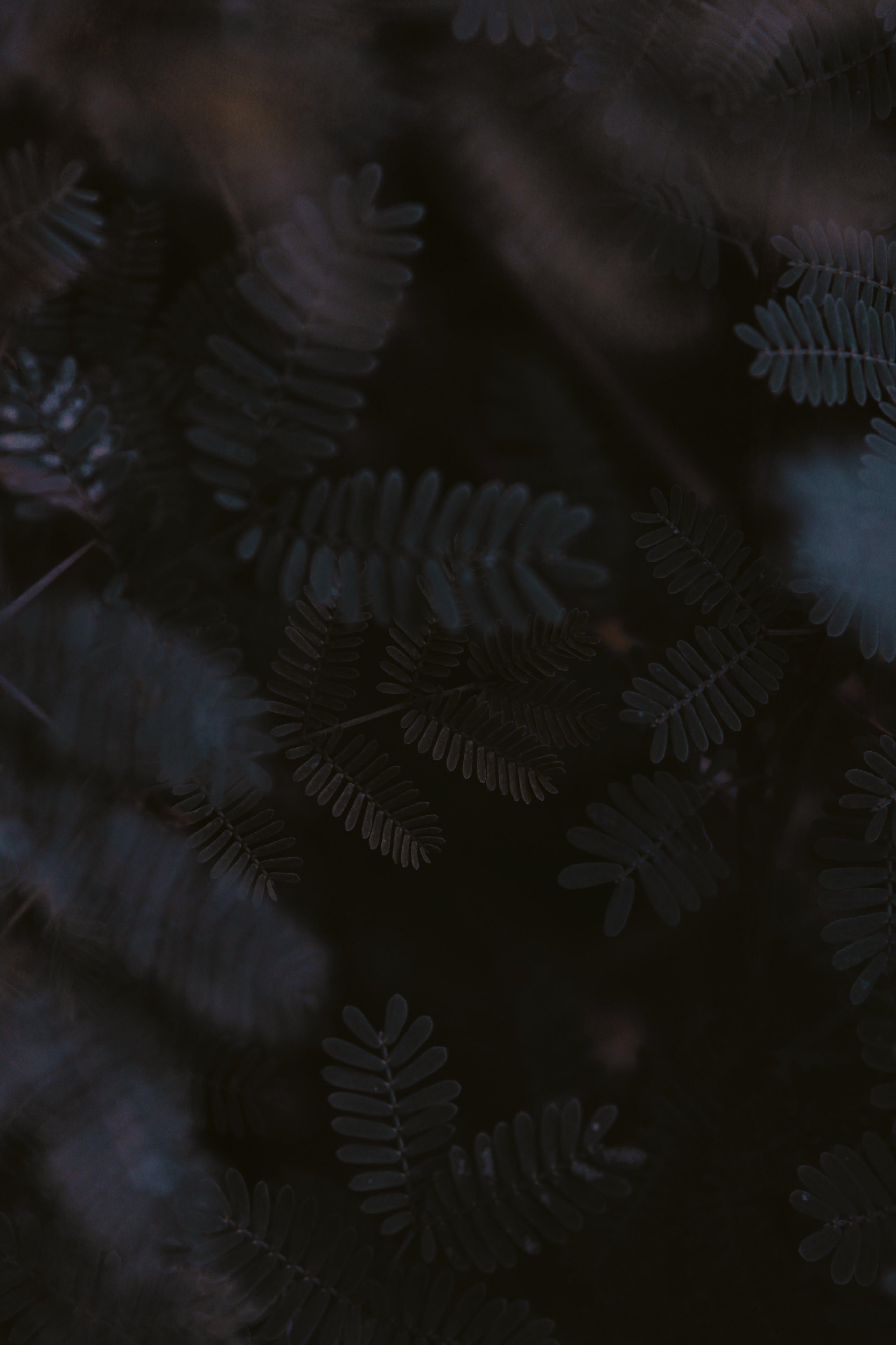 dunkel, farn, farnblättern