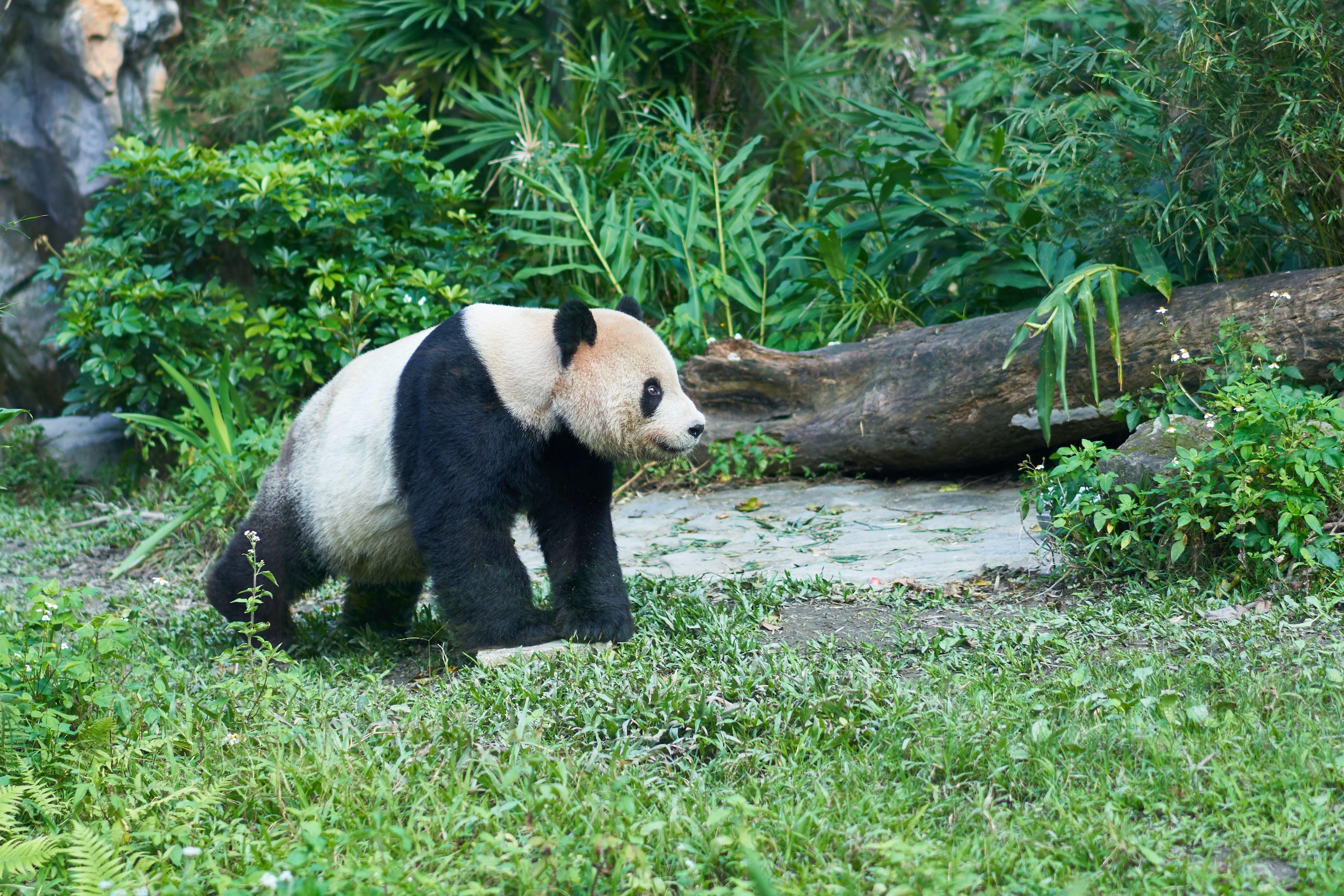 Free stock photo of animal, bear, mammal, nature
